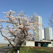 二子玉川ライズタワー&レジデンス タワーセントラル周辺サムネイル