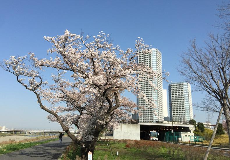 二子玉川ライズタワー&レジデンス タワーセントラル 周辺 イメージ