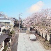 ディアナコート八雲桜樹眺望サムネイル