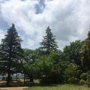 アールブラン新百合ヶ丘弘法松公園サムネイル
